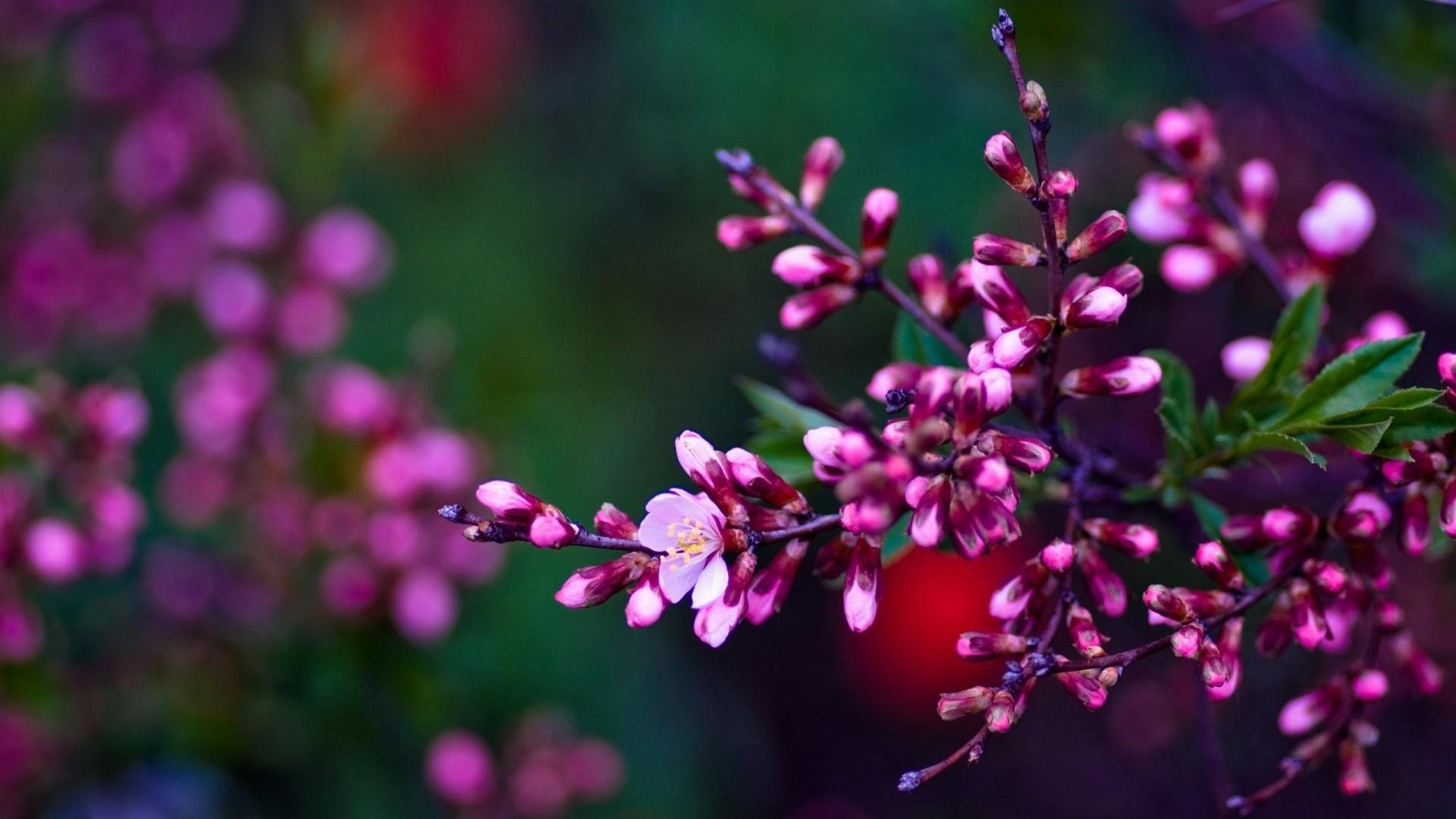 spring flowers backgrounds hd | pixelstalk