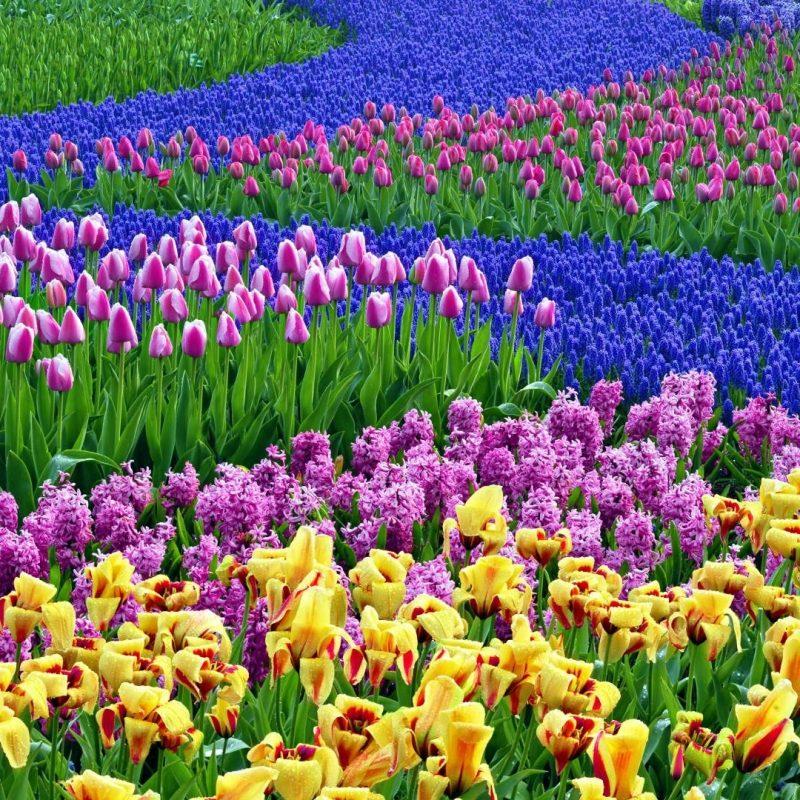 10 New Spring Flowers Background Desktop Full Hd 1920 1080 For Pc