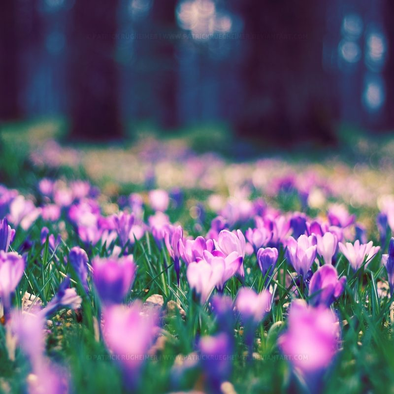 10 Most Popular Pictures Of Spring Flowers For Wallpaper FULL HD 1080p For PC Desktop 2020 free download spring flowers wallpaper nature wallpapers for free download about 1 800x800