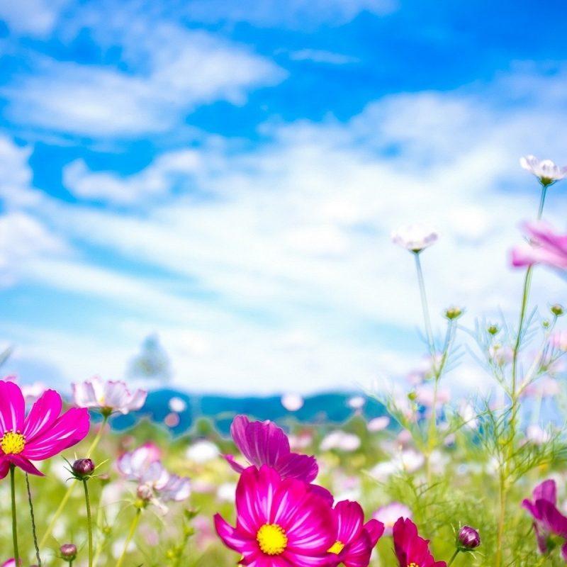 10 New Spring Flowers Background Desktop FULL HD 1920×1080 For PC Desktop 2018 free download spring flowers wallpapers free download subwallpaper 800x800