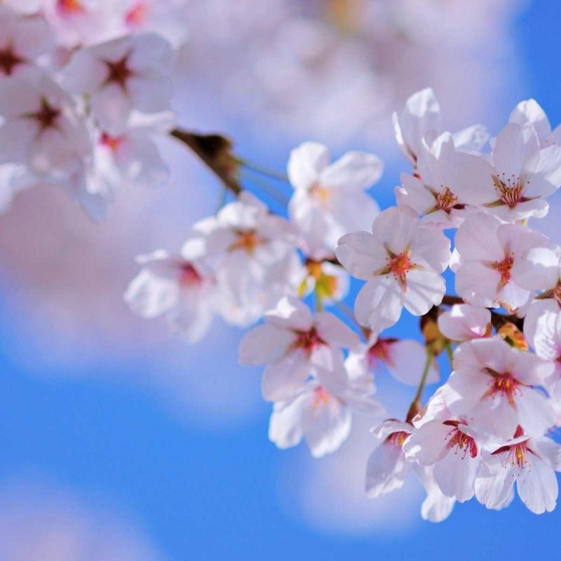 Spring Flowers Vintage Wallpapers Download at