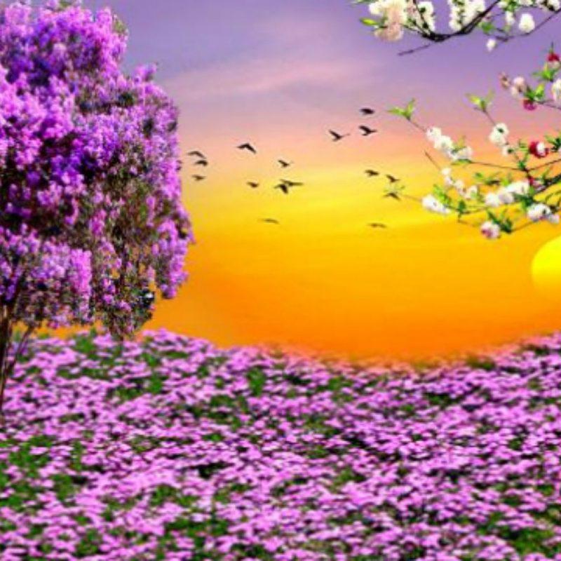 10 Best Free Spring Wallpaper For Computer FULL HD 1920×1080 For PC Desktop 2018 free download spring hd desktop wallpaper free spring desktop wallpapers 1 800x800