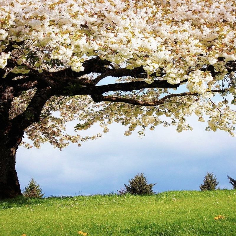 10 Top Spring Hd Wallpaper 1920X1080 FULL HD 1920×1080 For PC Background 2020 free download spring hd wallpapers 24 800x800