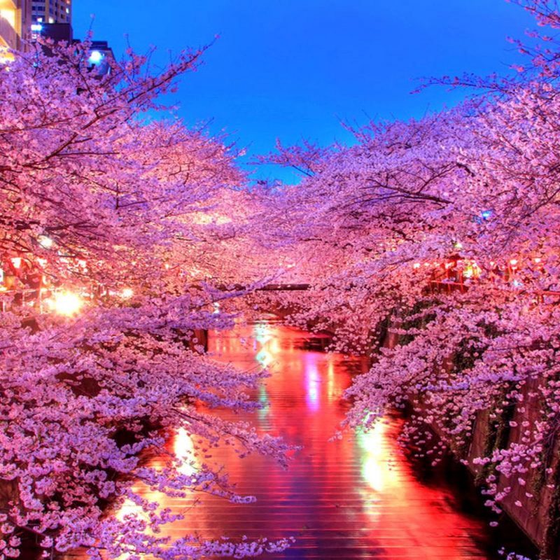 10 Best Beautiful Japan Wallpaper FULL HD 1080p For PC Desktop 2020 free download spring in japan wallpapers crazy frankenstein 800x800