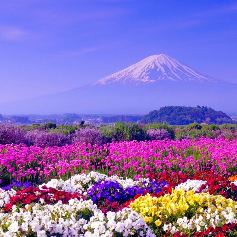 10 Best Hd Spring Wallpaper Backgrounds FULL HD 1920×1080 For PC Background 2020 free download spring in japan wallpapers hd free download pixelstalk 800x800
