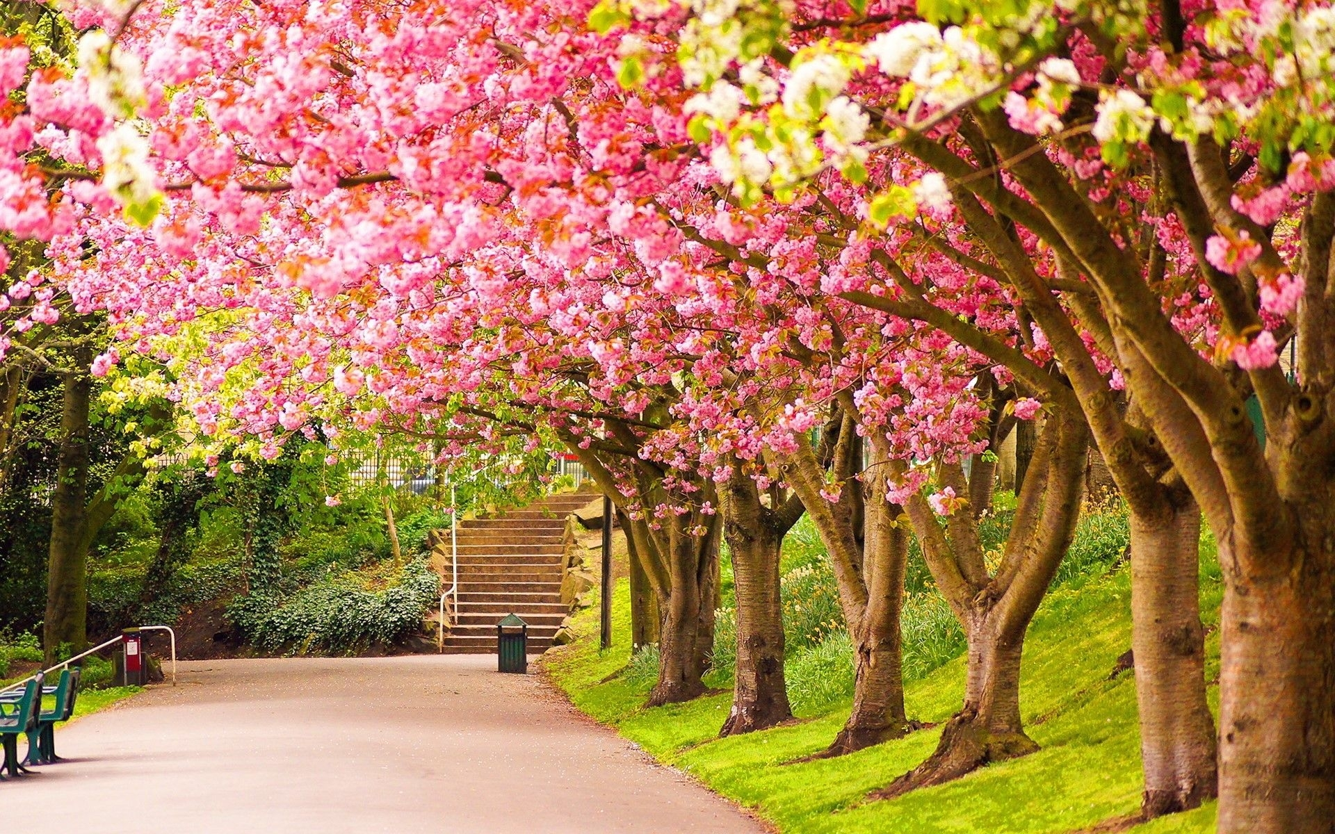 spring nature desktop wallpaper. | bunga | pinterest | nature