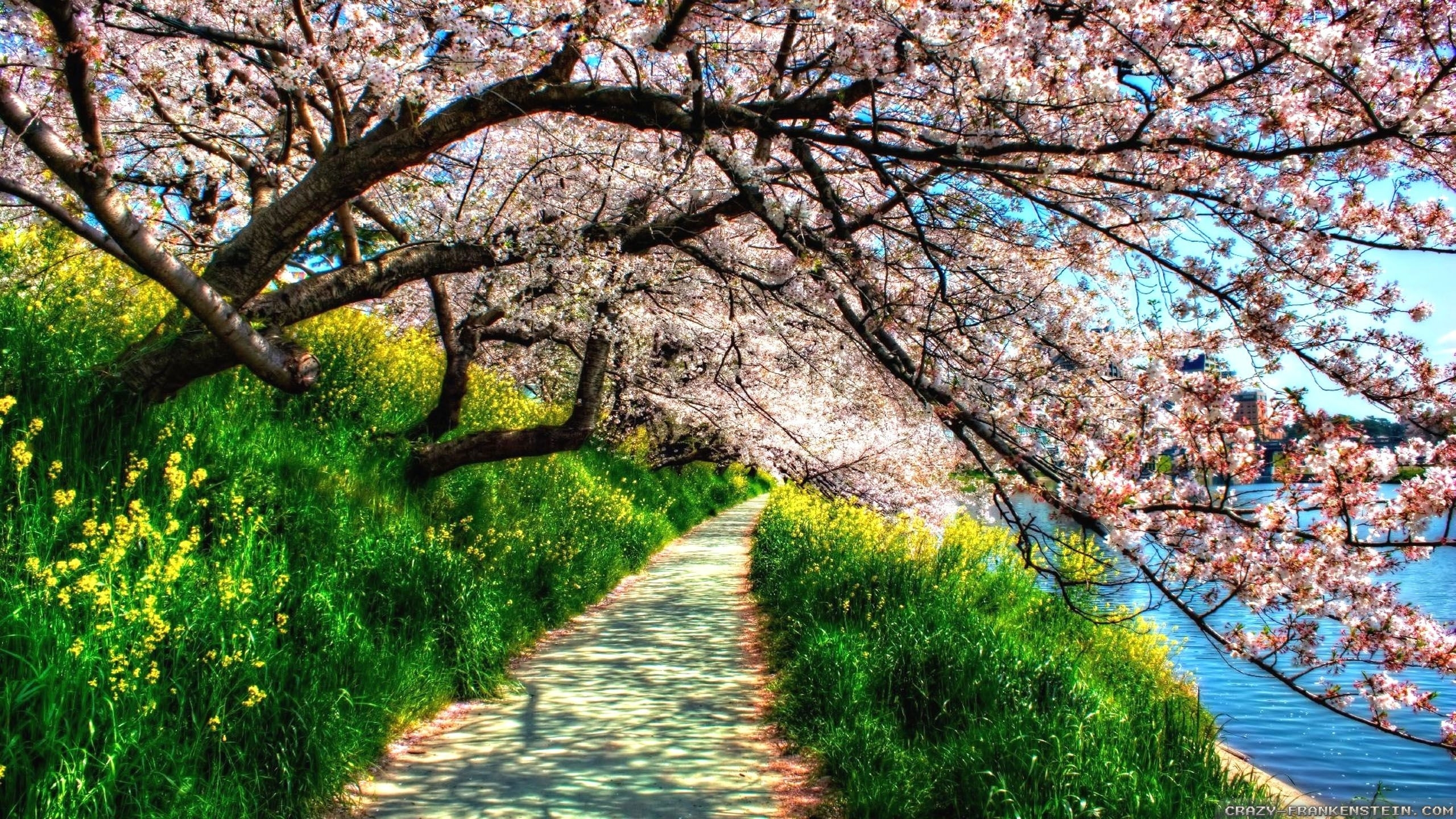 spring nature hd wallpapers - wallpaper cave