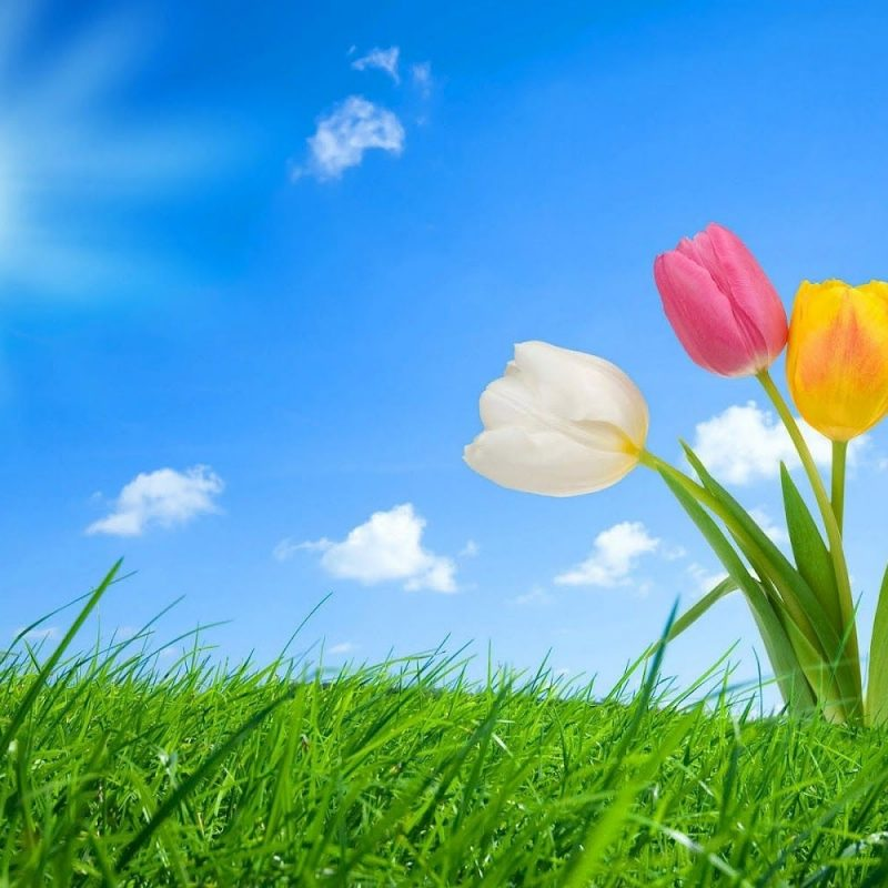 10 New Free Spring Wallpaper Backgrounds FULL HD 1920×1080 For PC Background 2020 free download spring pictures for desktop best top desktop spring wallpapers hd 800x800
