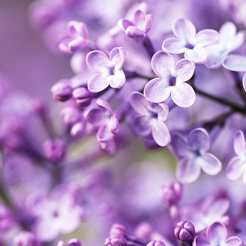 10 Top Spring Flowers Wallpaper Hd FULL HD 1080p For PC Desktop 2021 free download spring purple flowers wallpapers hd wallpapers id 12714 800x800