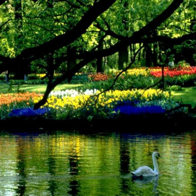 10 New Free Desktop Wallpaper Spring Scenes FULL HD 1080p For PC Background 2021 free download spring scenery wallpaper for computer free download coffe 800x800