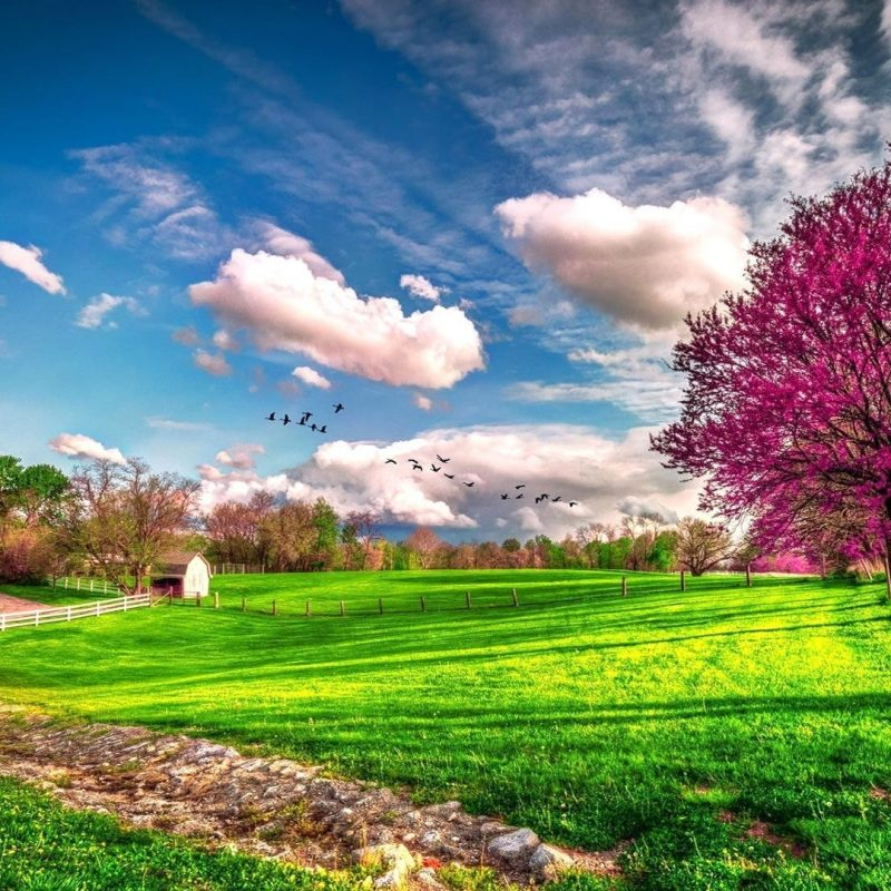10 Best Spring Scenery Wallpaper Widescreen FULL HD 1080p For PC Background 2021 free download spring scenery wallpapers group 71 800x800