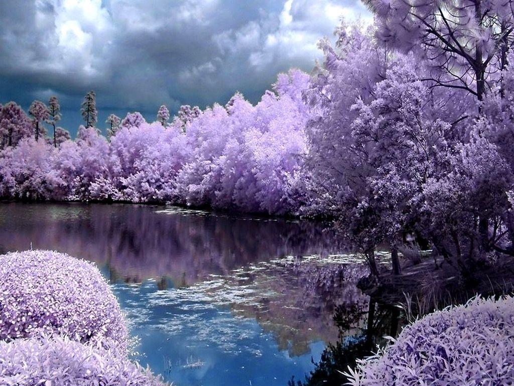 spring screensavers backgrounds   ventube purple spring new