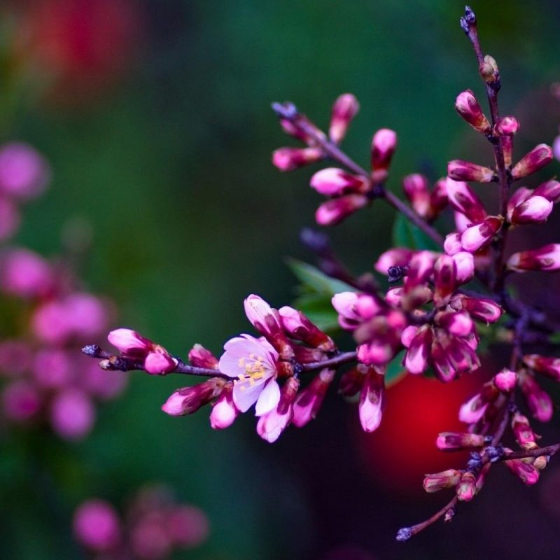 10 Most Popular Pictures Of Spring Flowers For Wallpaper FULL HD 1080p For PC Desktop 2020 free download spring screensavers flowers flowers pinterest flower wallpaper 800x800