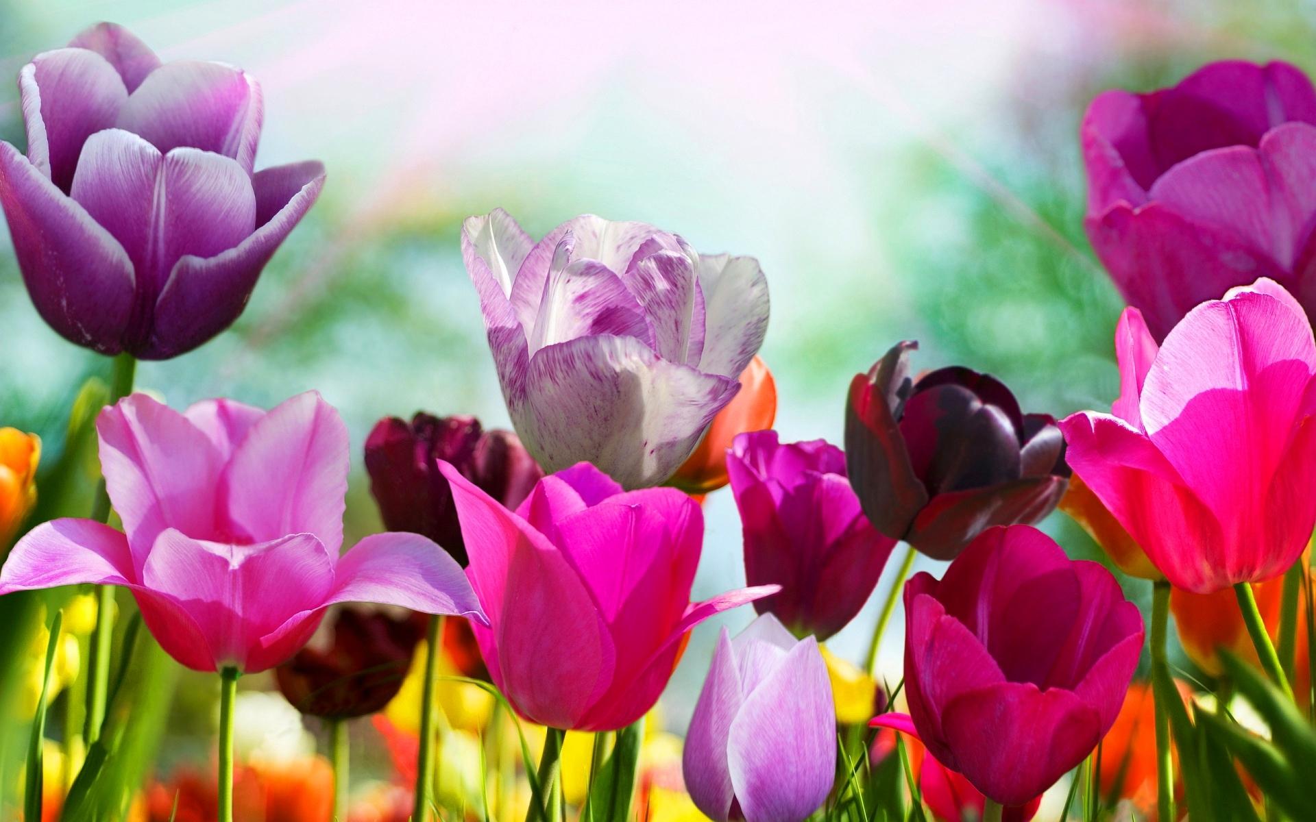 spring screensavers hd 21552 1920x1200 px ~ hdwallsource