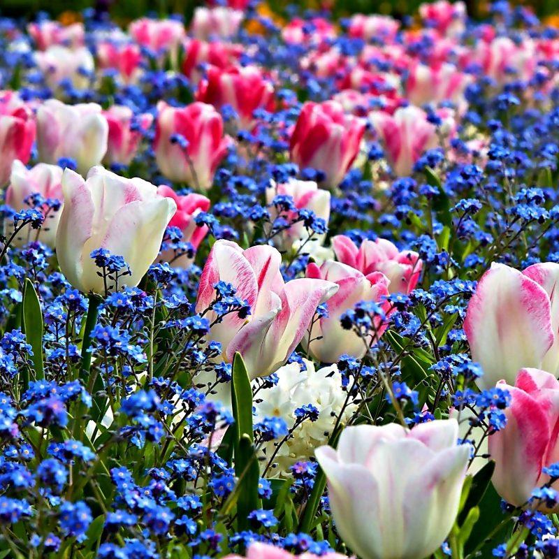 Spring Flowers Screensavers Wallpaper Flowers Healthy