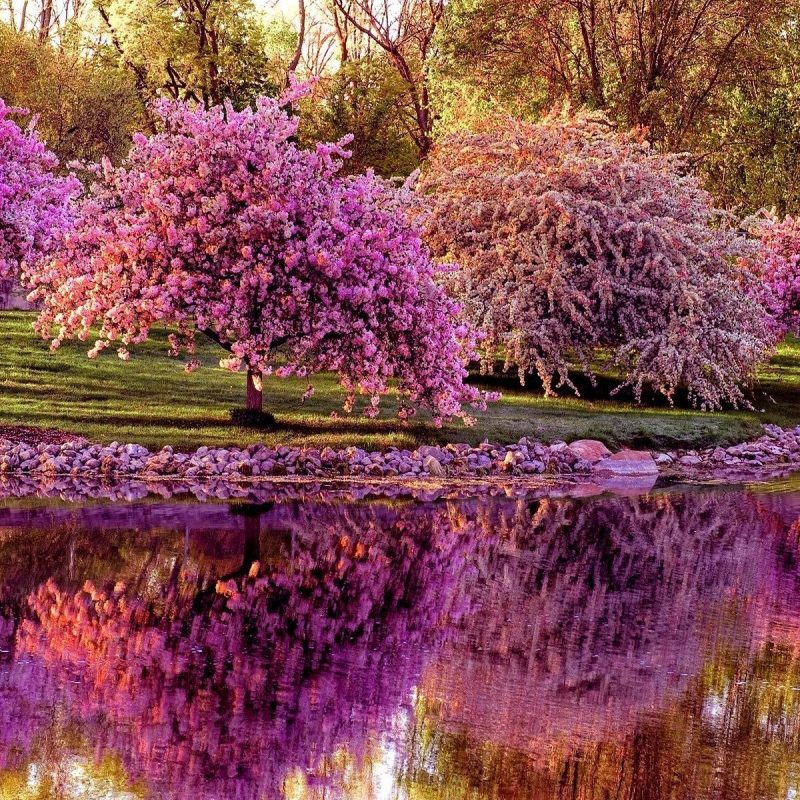 10 Latest Spring Trees Wallpaper Desktop FULL HD 1080p For PC Desktop 2020 free download spring tree wallpaper 25931 baltana 800x800