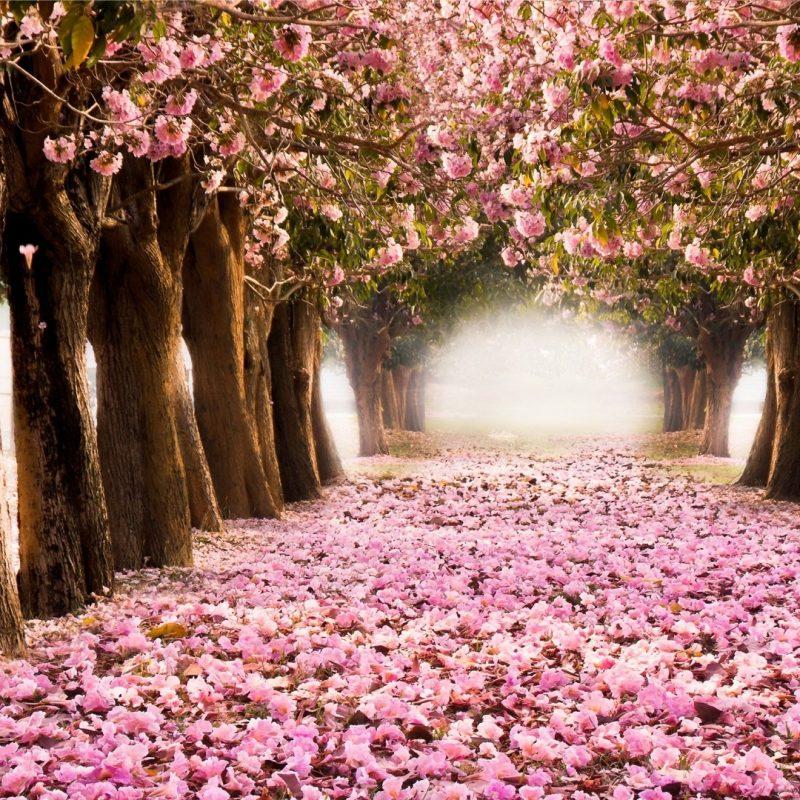 10 Latest Spring Trees Wallpaper Desktop FULL HD 1080p For PC Desktop 2020 free download spring tree widescreen wallpapers 25932 baltana 800x800