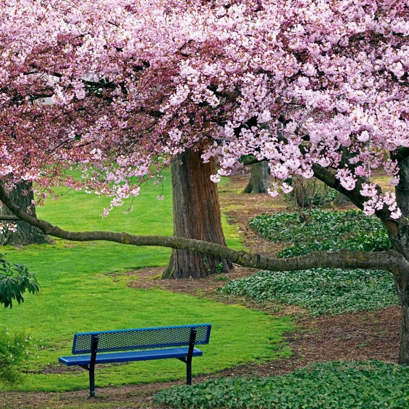 10 Latest Spring Trees Wallpaper Desktop FULL HD 1080p For PC Desktop 2020 free download spring trees and flowers wallpapers 1080p earthly wallpaper 1080p 800x800