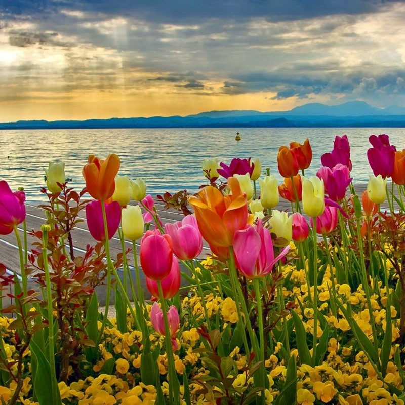 10 New Desktop Backgrounds Spring Flowers FULL HD 1080p For PC Background 2020 free download spring tulips spring fever storms flowers pinterest lake 800x800