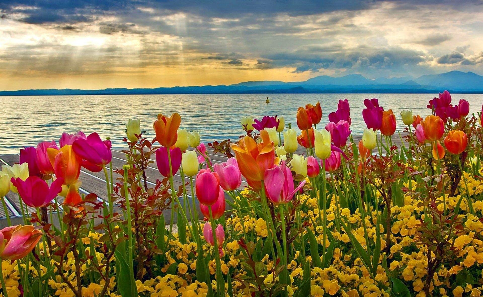 spring tulips | spring fever/ storms/ flowers | pinterest | lake