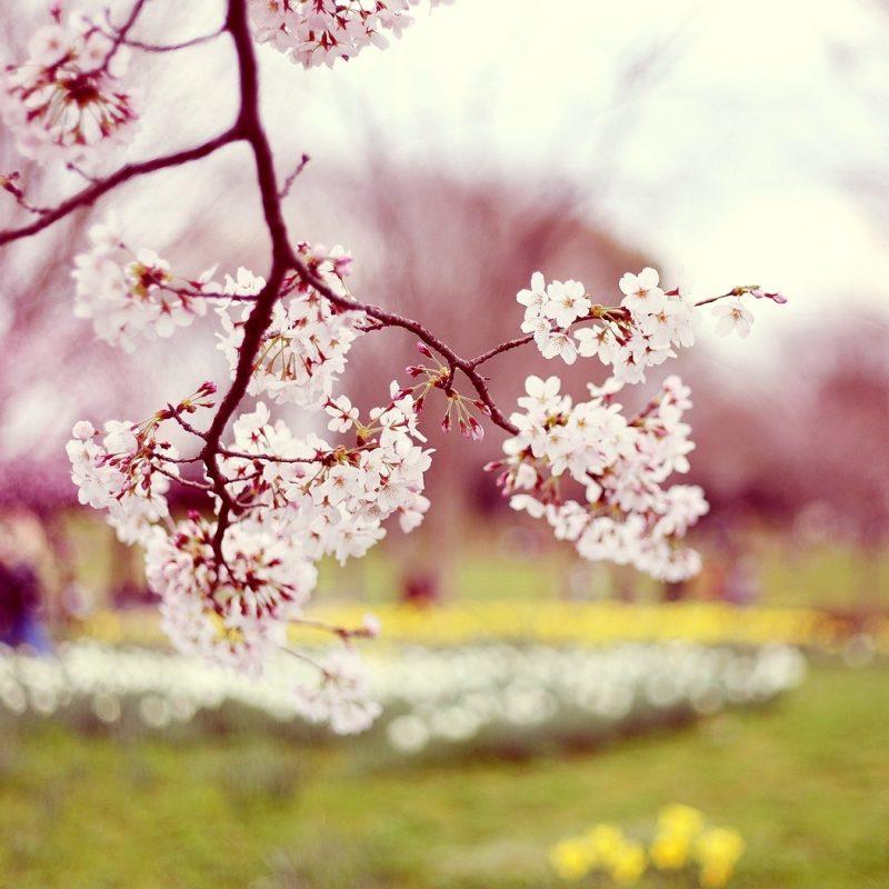 10 Best Hd Spring Wallpaper Backgrounds FULL HD 1920×1080 For PC Background 2020 free download spring wallpaper 15911 1680x1050 px hdwallsource 800x800