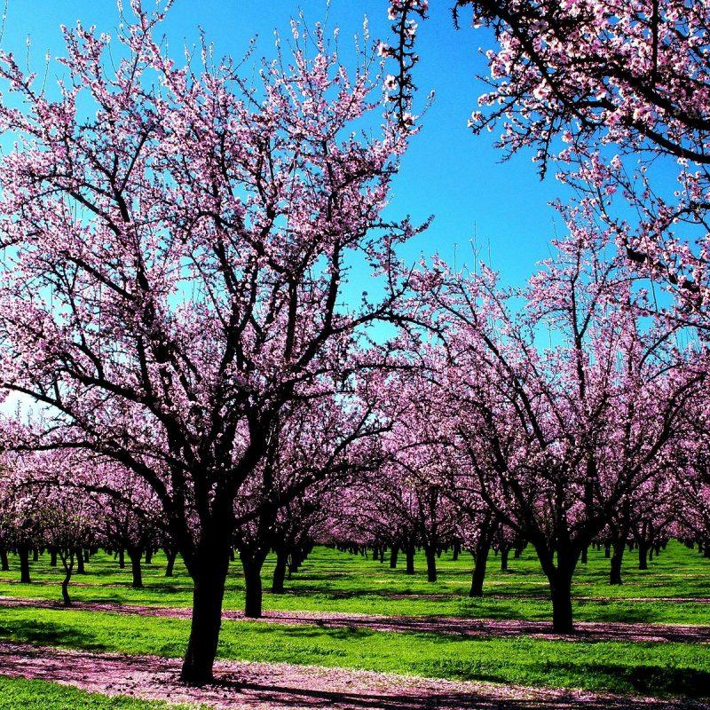 10 Best Spring Nature Desktop Wallpaper FULL HD 1920×1080 For PC Background 2020 free download spring wallpaper spring nature wallpapers in jpg format for free 800x800