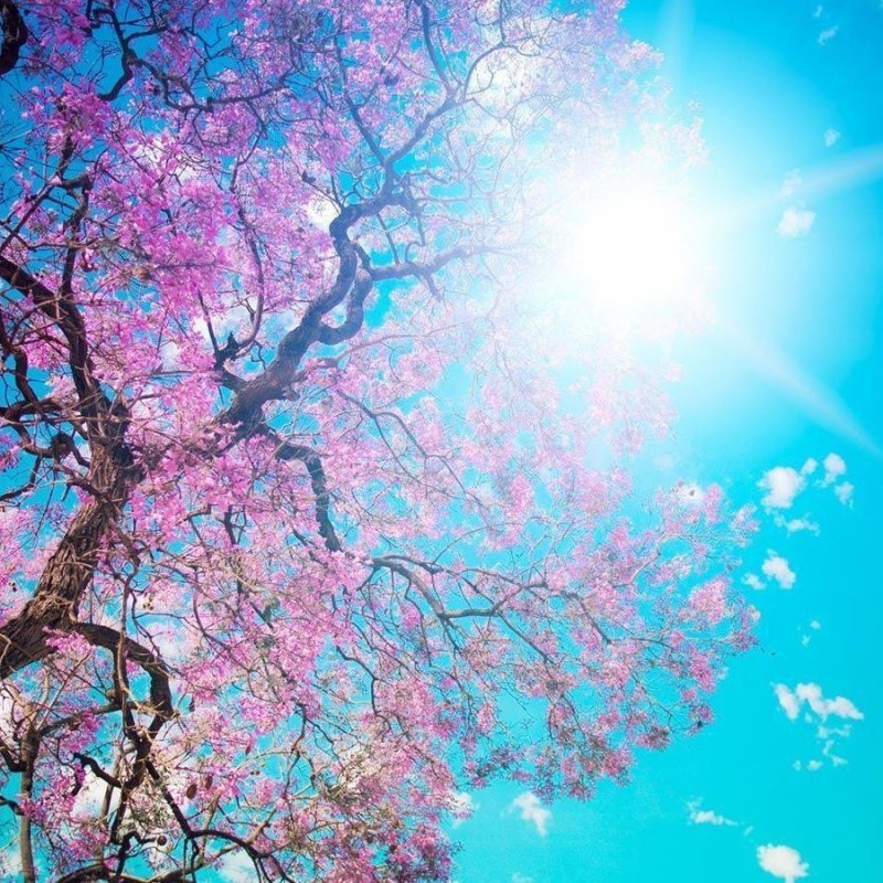 10 Most Popular Spring Wallpaper For Computers FULL HD 1080p For PC Desktop 2020 free download spring wallpapers computer wallpaper cave 800x800