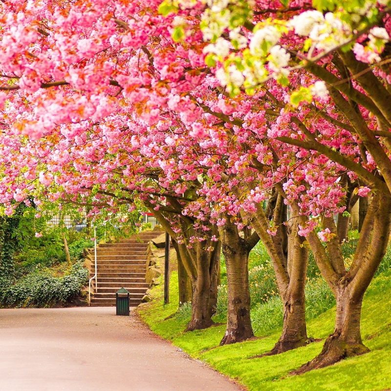 10 Best Spring Scenery Wallpaper Widescreen FULL HD 1080p For PC Background 2021 free download spring wallpapers hd download free 800x800