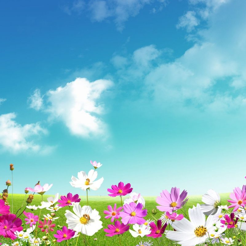 10 Best Free Spring Background Images FULL HD 1080p For PC Desktop 2018 free download spring wallpapers hd download free pixelstalk 800x800