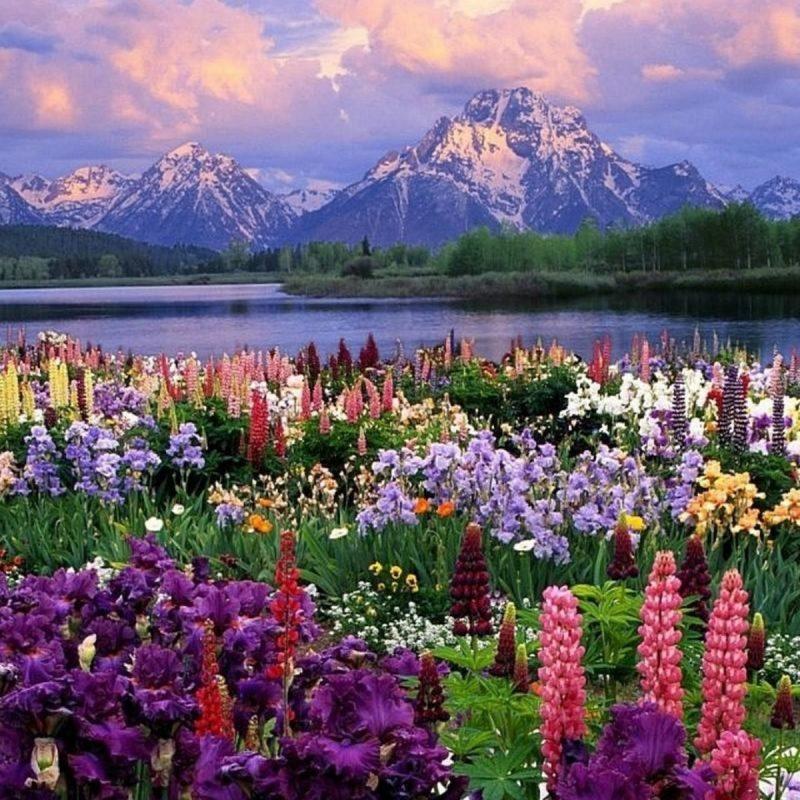 10 Most Popular Springtime Pictures For Desktop FULL HD 1920×1080 For PC Background 2021 free download springtime desktop wallpaper 60 images 2 800x800