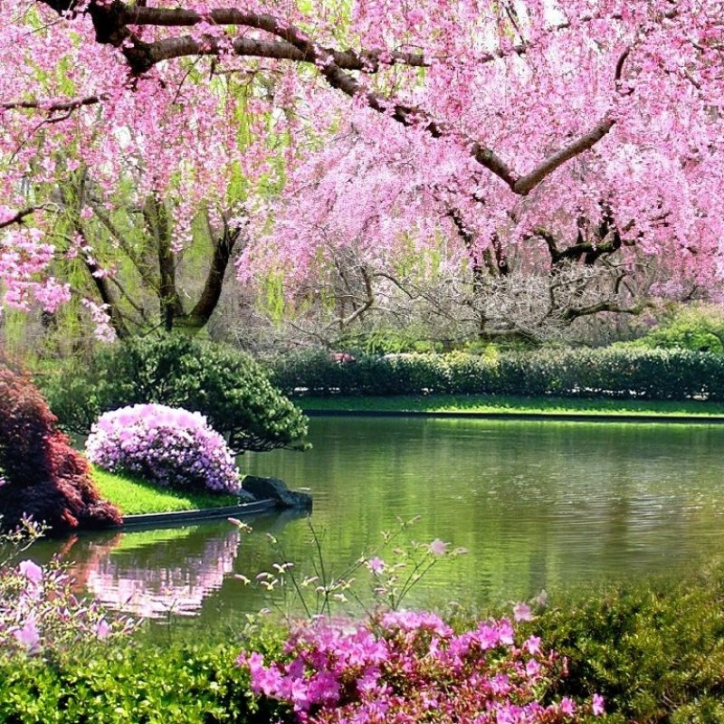 10 Most Popular Springtime Pictures For Desktop FULL HD 1920×1080 For PC Background 2021 free download springtime hd desktop wallpaper 25937 baltana 800x800