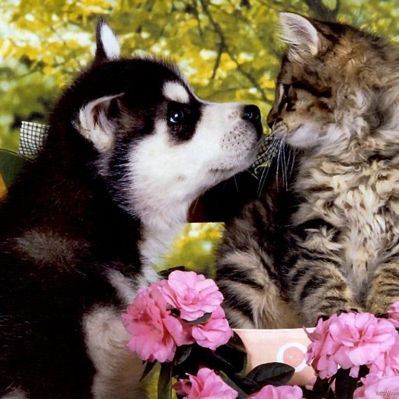 10 New Kitten And Puppy Wallpaper FULL HD 1920×1080 For PC Desktop 2020 free download springtime puppies cat dog flower wallpaper kittens flower 800x800