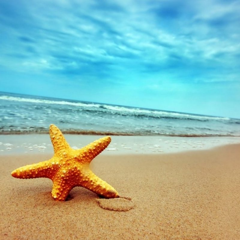 10 New Summer Background For Computer FULL HD 1080p For PC Desktop 2020 free download starfish summer pictures summer 800x800