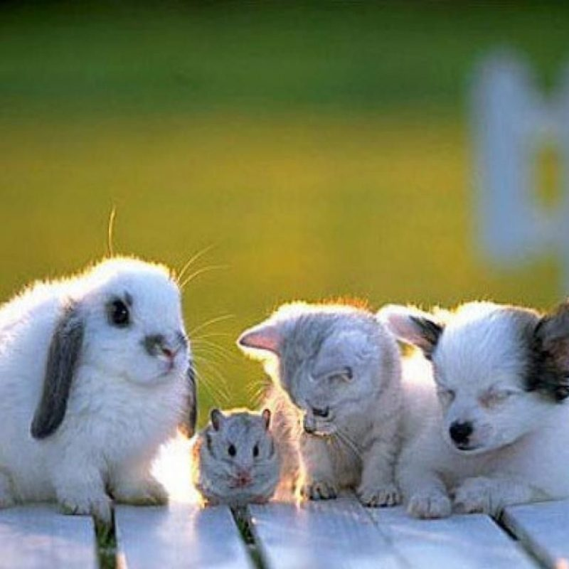 10 Best Wallpaper Of Baby Animals FULL HD 1920×1080 For PC Desktop 2020 free download stressed about the election look at these baby animals baby 1 800x800
