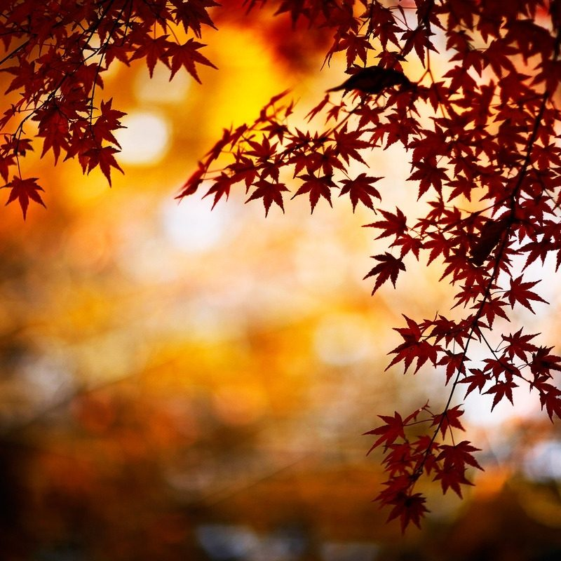 10 Best Fall Backgrounds For Pictures FULL HD 1080p For PC Background 2021 free download stunning fall backgrounds 18185 1280x800 px hdwallsource 800x800