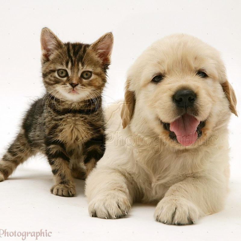 10 Top Kittens And Puppies Pics FULL HD 1920×1080 For PC Desktop 2021 free download summers here and so are kittens and puppies tauranga veterinary 800x800
