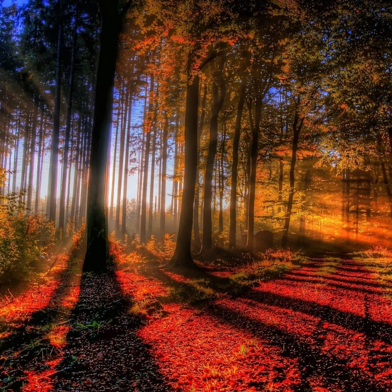 10 Best Autumn Forest Wallpaper Hd FULL HD 1920×1080 For PC Desktop 2020 free download sunlit autumn forest wallpaper 3831 800x800