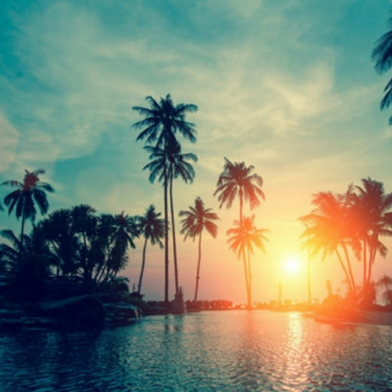 10 Best Palm Trees Wallpaper Hd FULL HD 1080p For PC Background 2018 free download sunset with palm trees wallpaper wallpaper studio 10 tens of 800x800