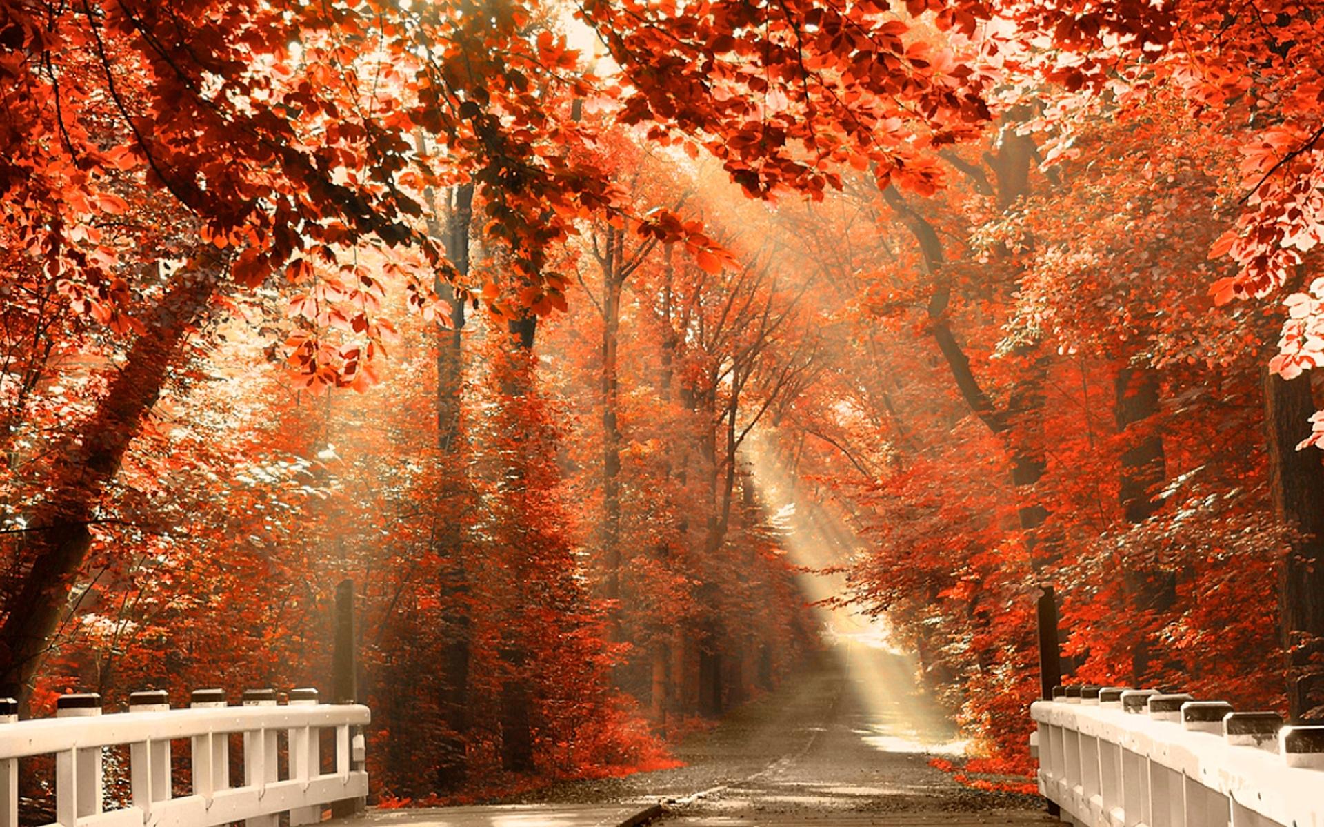 sunshine fall leaves wallpaper pc wallpaper | wallpaperlepi