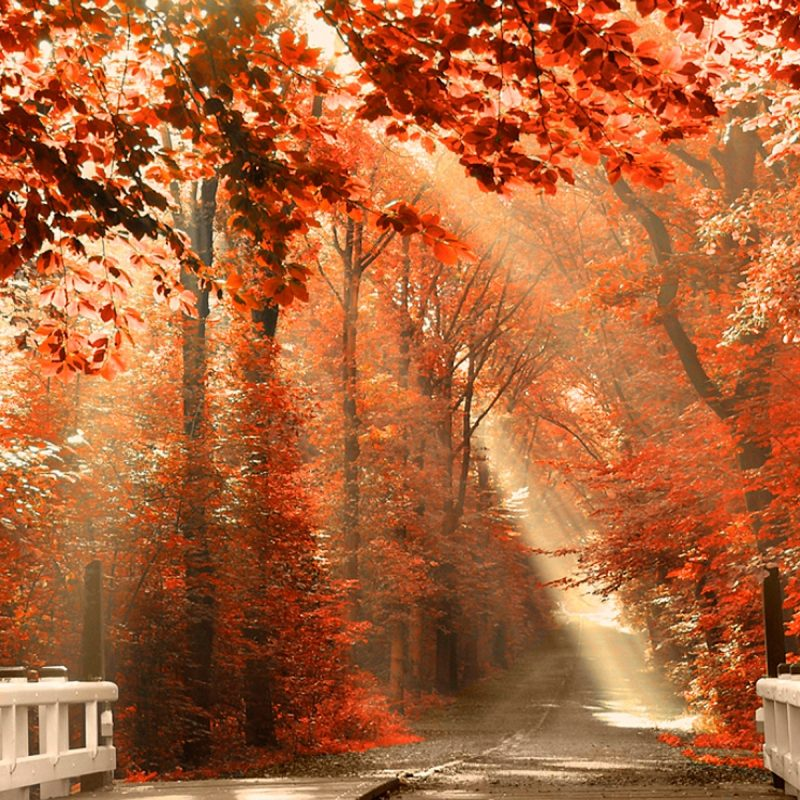 10 Latest Autumn Wallpaper For Pc FULL HD 1080p For PC Background 2021 free download sunshine fall leaves wallpaper pc wallpaper wallpaperlepi 800x800