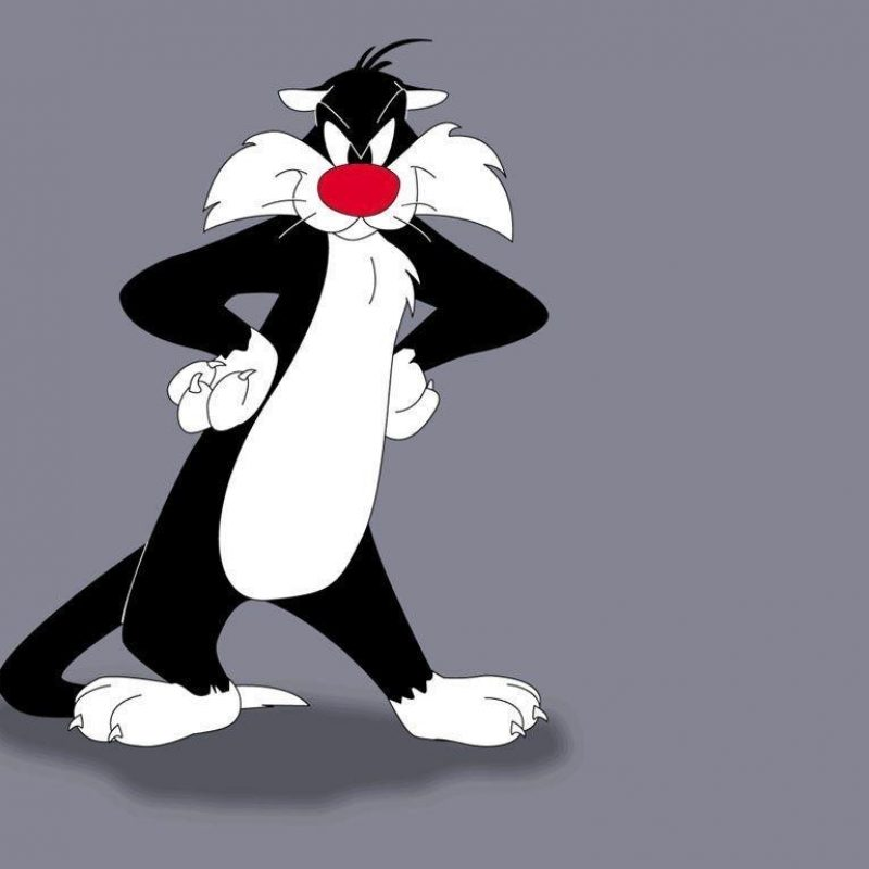 10 Most Popular Sylvester The Cat Images FULL HD 1920×1080 For PC Background 2018 free download sylvester cat wallpapers wallpaper cave 1 800x800