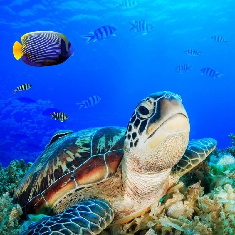 10 New Sea Turtle Iphone Wallpaper FULL HD 1080p For PC Background 2018 free download tartaruga animais e bichos pinterest wallpaper turtle and animal 800x800