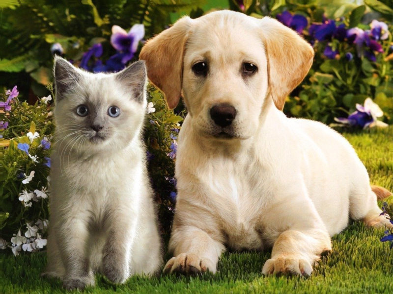 10 Most Popular Puppy And Kitten Wallpapers FULL HD 1920×1080 For PC Background 2021 free download teddybear64 images kittens puppies hd wallpaper and background 800x600