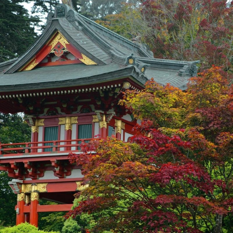10 Most Popular Japanese Tea Garden Wallpaper FULL HD 1920×1080 For PC Background 2018 free download temple gate japanese tea garden san francisco california 10 000 800x800