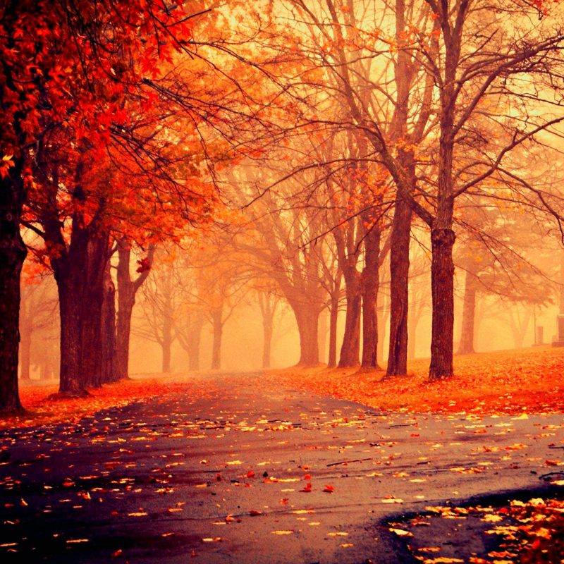 10 New Beautiful Fall Desktop Backgrounds FULL HD 1080p For PC Background 2020 free download terrific wallpapers backgrounds hd background hd wallpaper 800x800