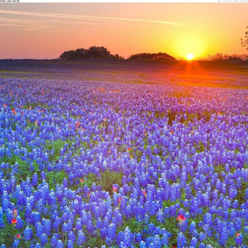 10 New Texas Hill Country Wallpaper FULL HD 1080p For PC Desktop 2020 free download texas bluebonnets texas hill country texas your hd wallpaper 800x800
