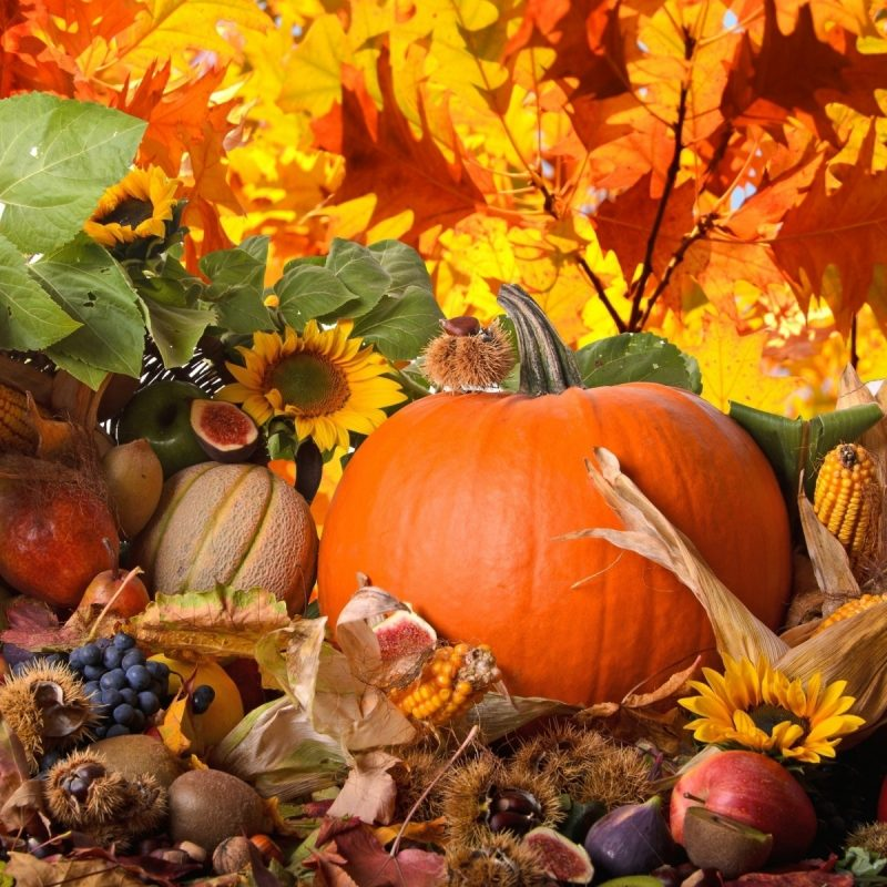 10 Top Thanksgiving Backgrounds For Desktop FULL HD 1080p For PC Background 2021 free download thanksgiving 10 thanksgiving wallpaper desktop backgrounds full hd 800x800