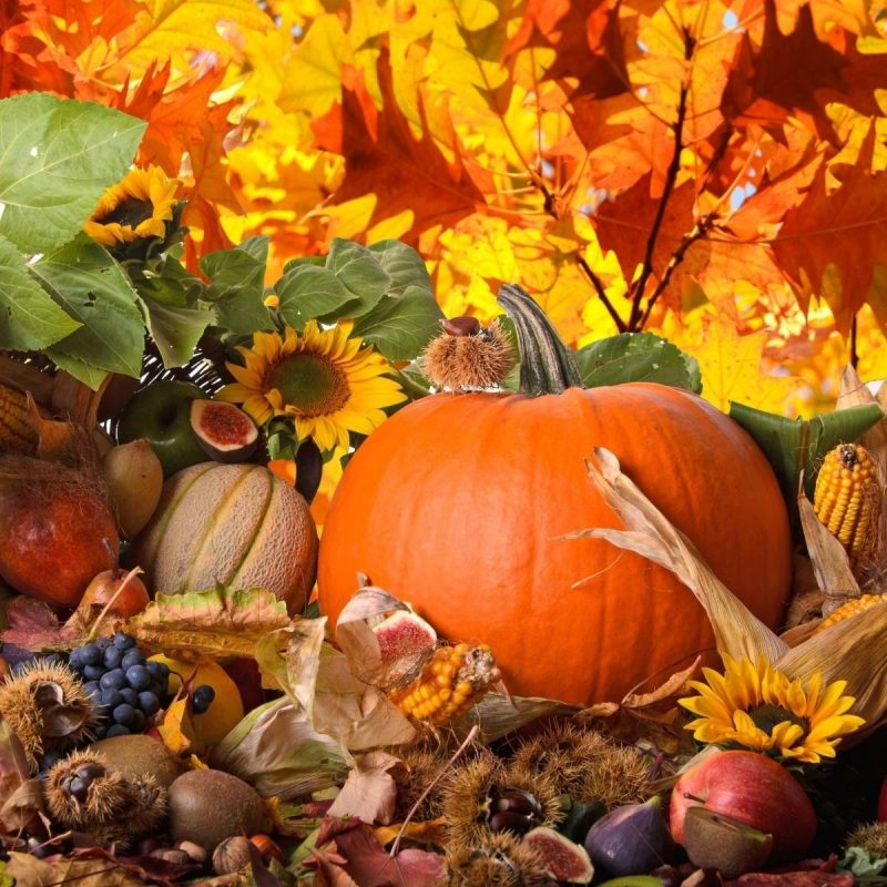 10 Best Thanksgiving Wallpaper For Android FULL HD 1920×1080 For PC Background 2018 free download thanksgiving wallpapers wallpaper cave 800x800