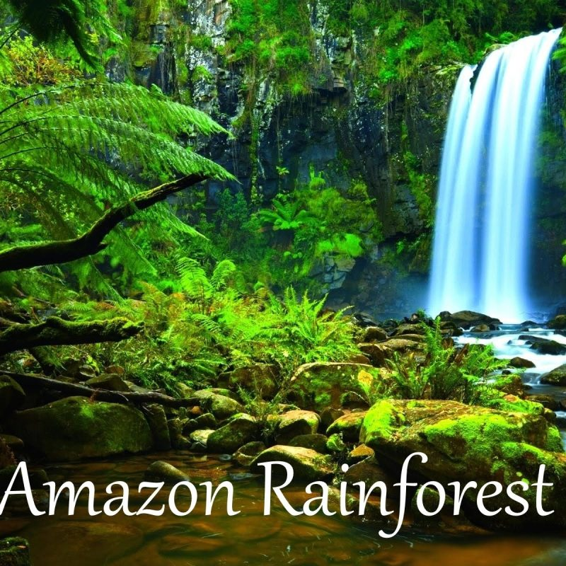 10 Top Pictures Of The Amazon Rainforest FULL HD 1920×1080 For PC Desktop 2020 free download the amazon rainforest facts hd youtube 1 800x800