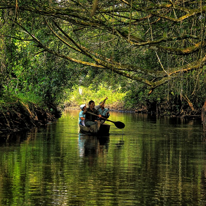 10 Top Pictures Of The Amazon Rainforest FULL HD 1920×1080 For PC Desktop 2020 free download the amazon rainforest for kids with free printable mini book 1 800x800